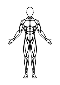Human Body (Front) Final-01.png
