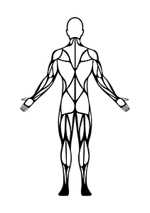 Human Body (back) Final-01.png