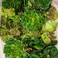 Vet Veggies | Lettuce Mix