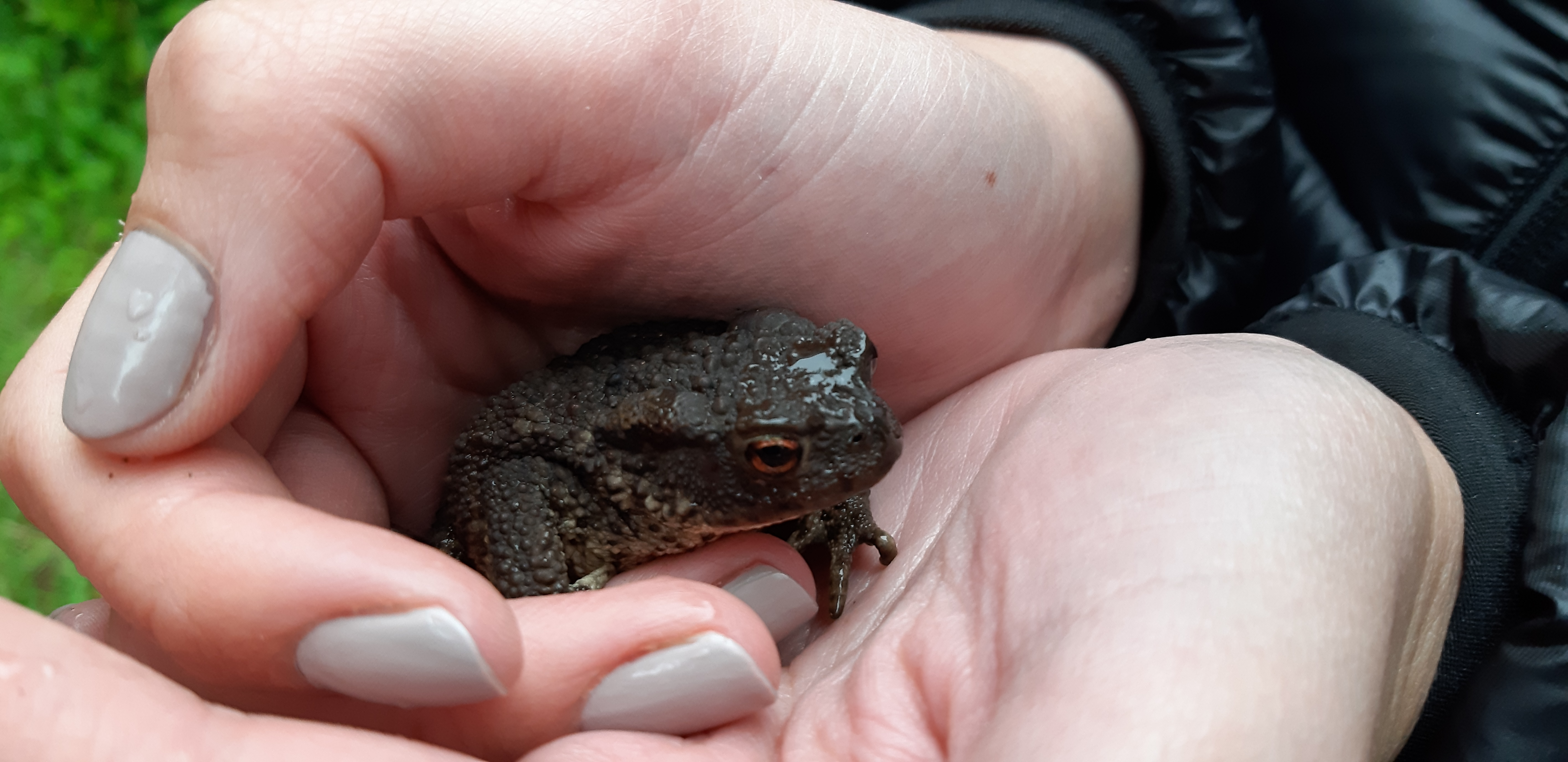 Resident Toad