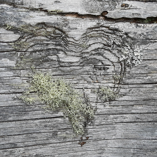 Heart%20and%20lichen_edited.png