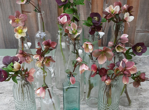 Hellebores and bottles