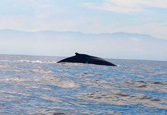 Punta-Mita-Whale-1024x707.jpg