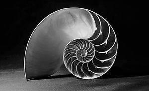 Shell-Golden-Ratio.jpg