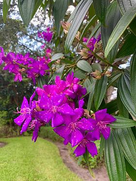 Flowering Tree in The Arbors