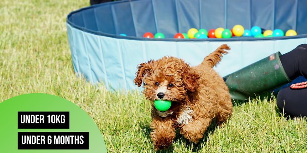 Puppy Social (UNDER 10kg and UNDER 6 months)