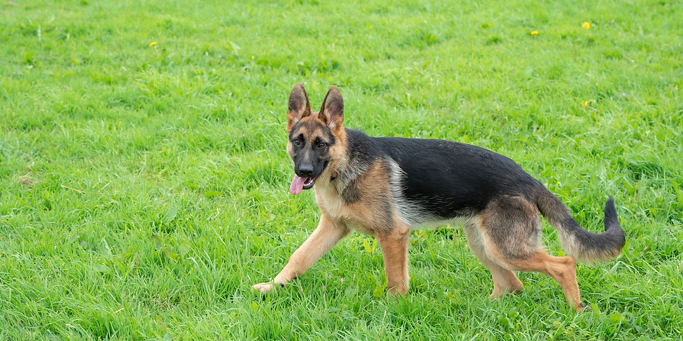 Medium & Large Dog Play