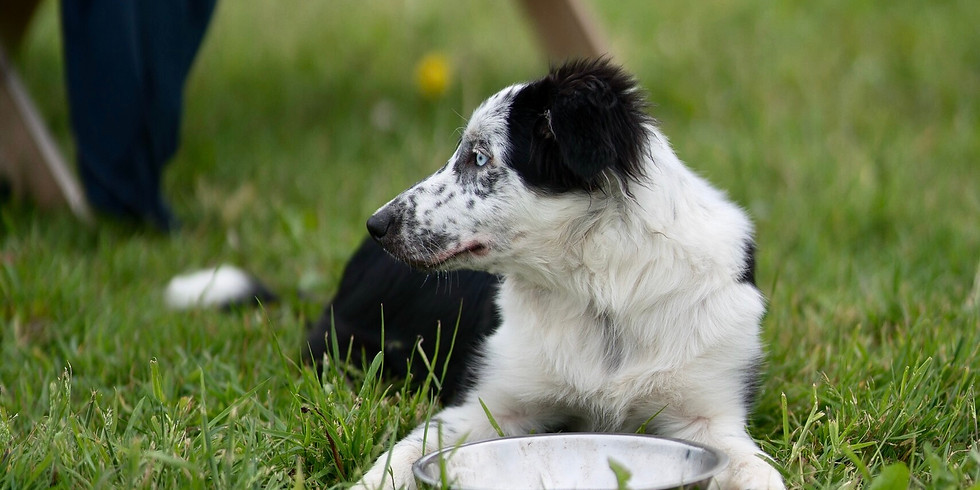 Puppy Social (OVER 10kg and 6-12 months of age)