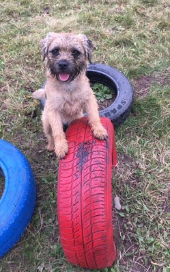 Dog on tyre