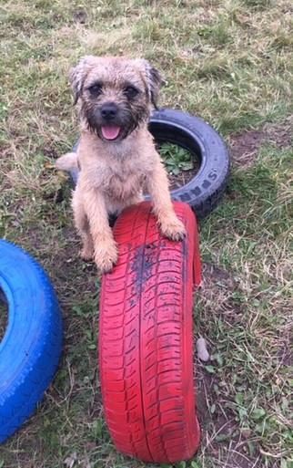 Dog on tyre