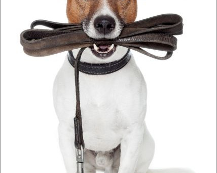 Polite Puppies: Teaching Your Pup To Be Courteous & Well-Mannered (Part 4 of 4)