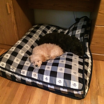 Another DCDogFinders happy customer
