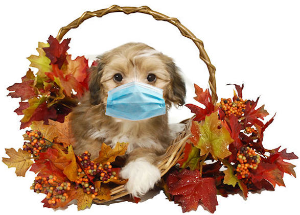 fall_puppy with mask.jpg