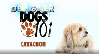 Dogs 101 Cavachon.PNG