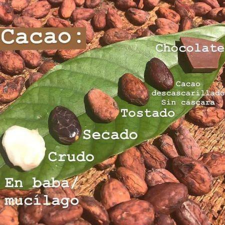 CACAO IN THE XXI CENTURY / CACAO EN EL SIGLO XXI