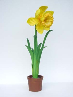 dafodil giant flower