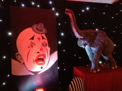 clown boards and baby elephant