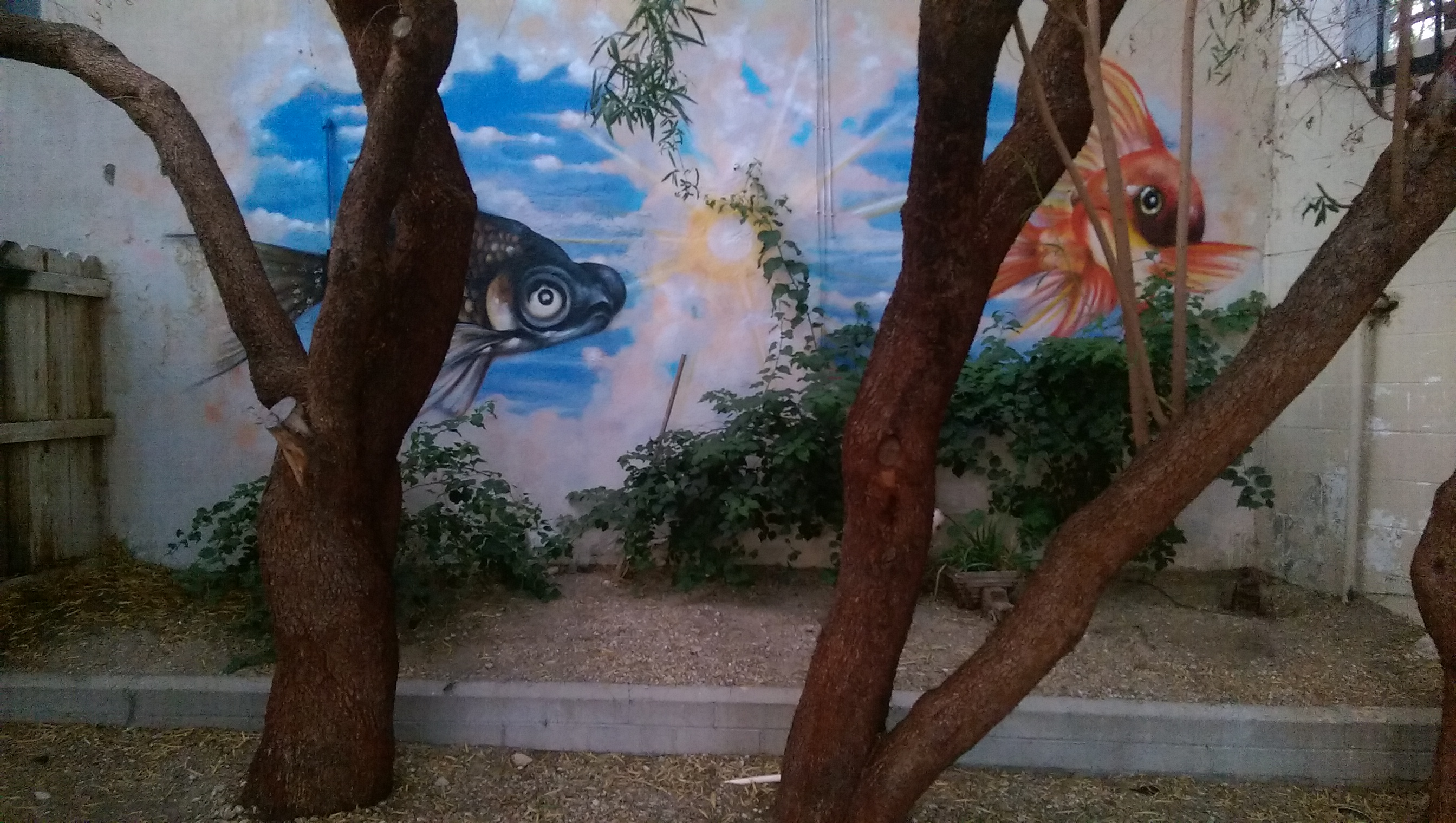 Goldfish Mural