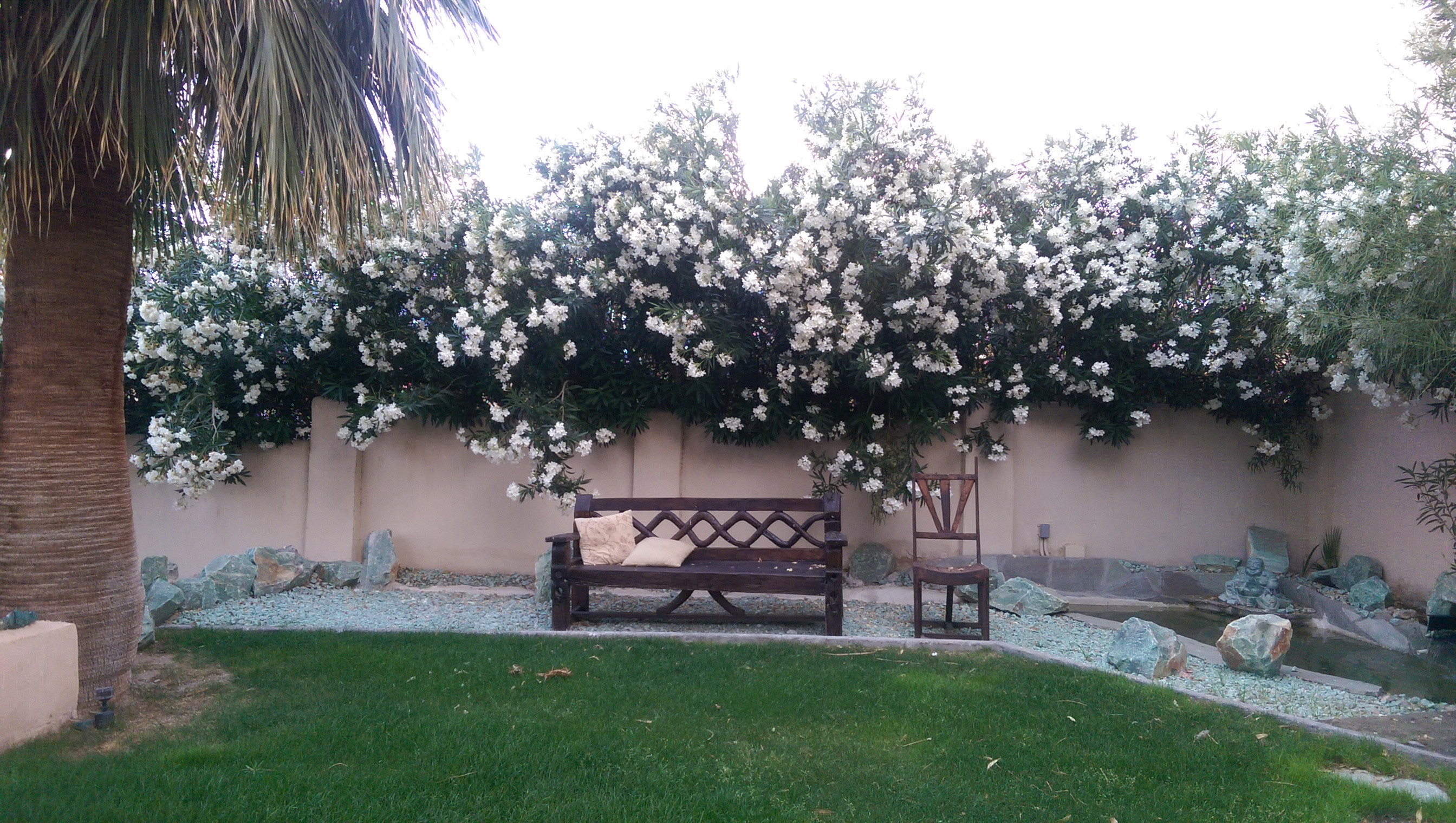 Sitting Area Under the Flowers