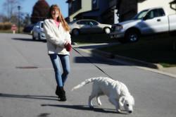 Asheville-Dog-Walking-7