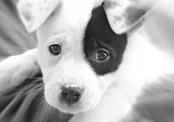 Asheville-Pet-Siting---Dog-Sitting-2
