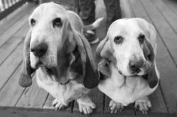 Asheville-Pet-Sitting-Dog-Sitting