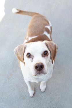 Asheville-Dog-Walking-3