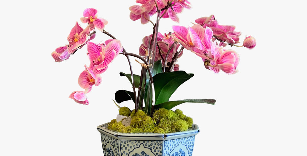 Faux Orchid in Blue and White Ceramic Vase