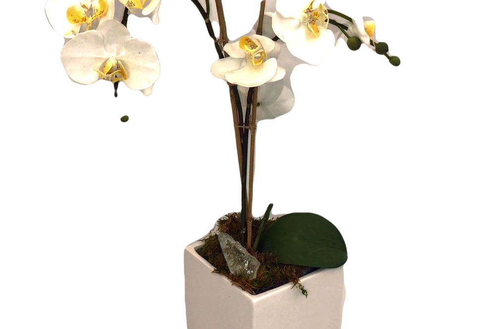 Silk Orchid - White