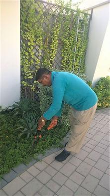 Villa Garden Maintenance Dubai