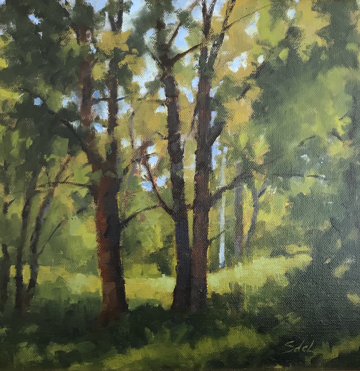SDL Woodland Light 10_ x 10_ Oil $625