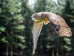 Just posted new Raptor pics on my website. Check it out :)