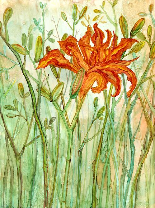 Orange Daylily : Greeting Card