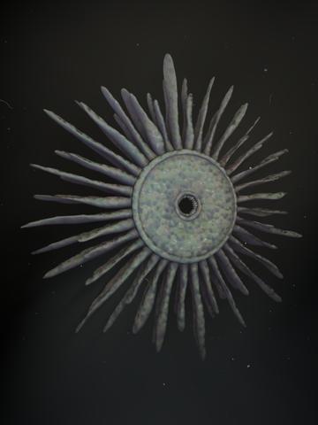 Sun Fish.png