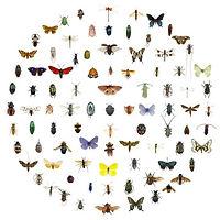 insetti.jpg