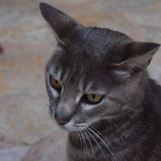 Hugo notre chat | our cat