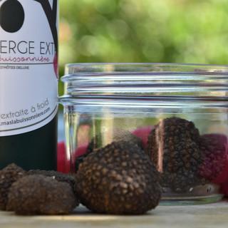 truffes d'été | summer truffles
