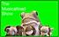 Screenshot 2021-02-21 at 10.28.12.png