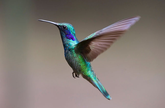 hummingbird-2139279_1920 (1).jpg