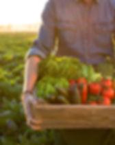 harvest 2.jpg