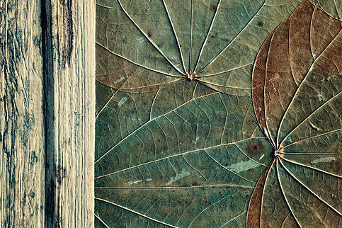 old-dried-leaves-and-wood-background-PXY