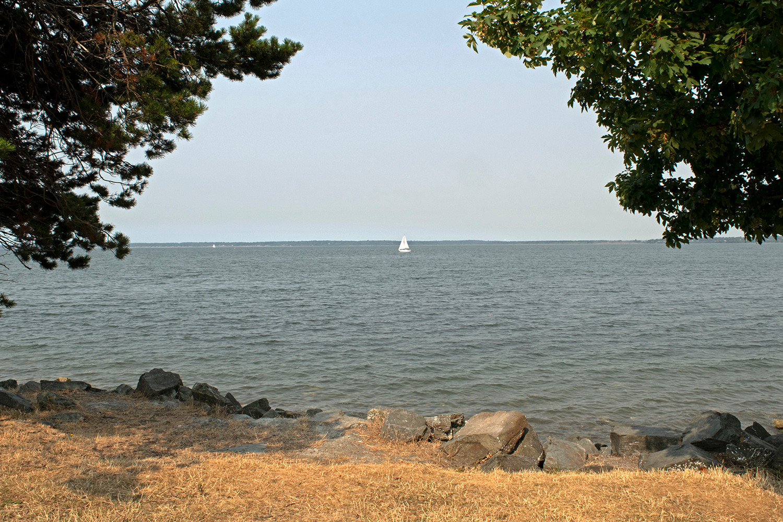 A single sailboat on Bellingham Bay framed by trees in Boulevard Park. Bellingham, WA. 2017.