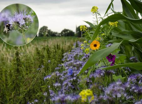 Fotowedstrijd landbouw