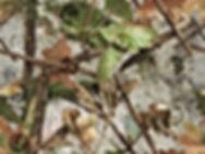 camo-bos-20x15cm-jachtsite-klein.jpg