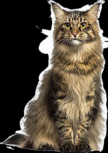Cat_PNG_Clip_Art-2580.png