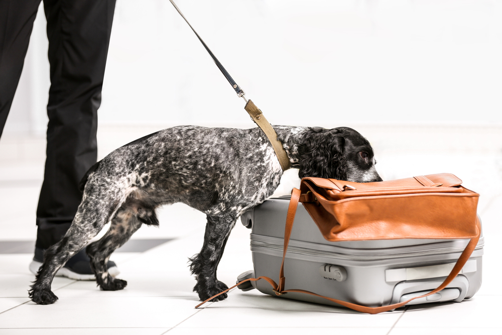 Obsin Detection Dog Security