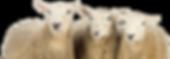 shutterstock_127120301-3.png
