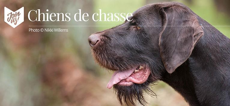 chiens de chasse.jpg