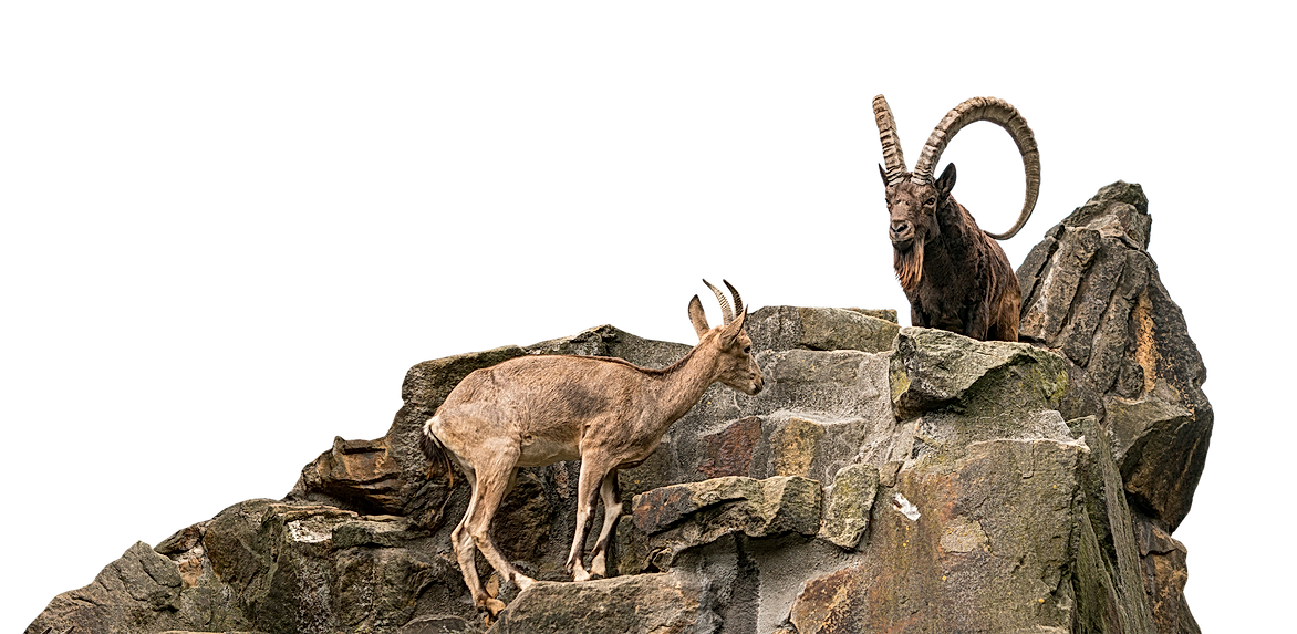 ibex-03.png