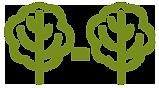 Boscompensatie en bosaanplant